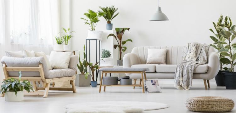 Légtisztító növények a lakásban