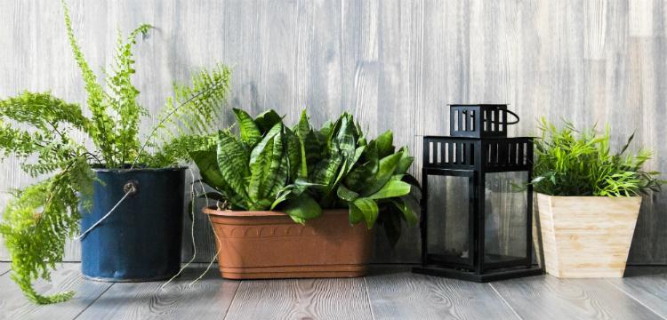 Mérgező növények az otthonunkban, amik bajt okozhatnak