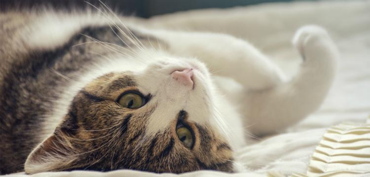 Macskaallergia – Minden, amit tudnunk kell róla
