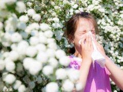 Csökkenthetők a pollenallergia tünetei